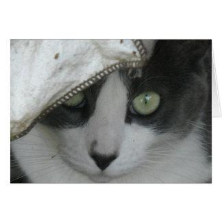 Saludos de la gente del gato tarjeta de felicitación