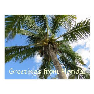 Saludos de la palmera de la Florida/del coco Postales
