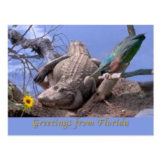Saludos de la postal de la Florida