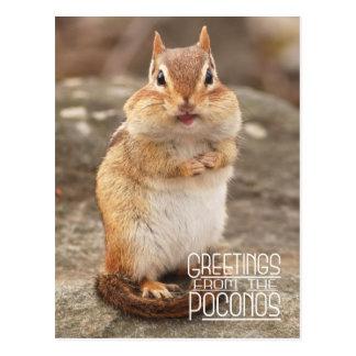 Saludos de la postal del Chipmunk de Poconos