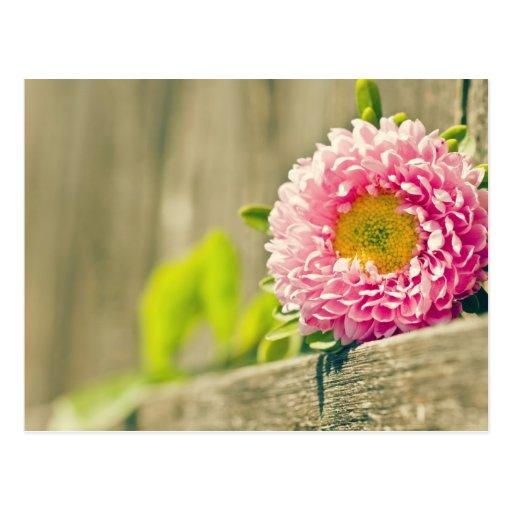 Saludos de la primavera postales