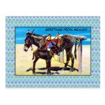 Saludos de los burros de la playa del vintage de M Postal