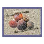 Saludos de los Seashells de Outer Banks Postales