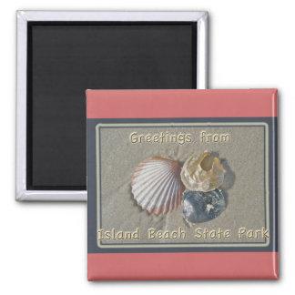 Saludos de los Seashells del parque de playa de IB Imán Cuadrado