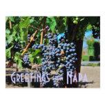 Saludos de Napa Valley California Tarjeta Postal