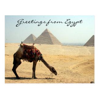 saludos del camello de la pirámide tarjeta postal