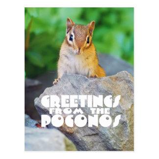 Saludos del chipmunk curioso del bebé de Poconos Postales