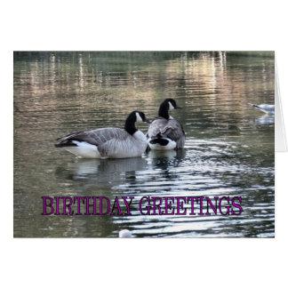 Saludos del cumpleaños de los gansos de Canadá Tarjeta De Felicitación