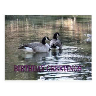 Saludos del cumpleaños de los gansos de Canadá Tarjeta Postal
