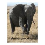 saludos del elefante de Kenia Tarjeta Postal