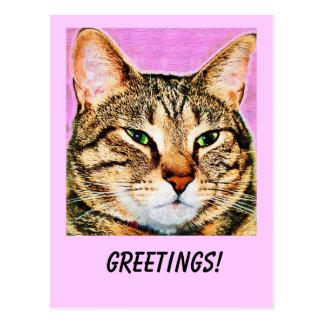Saludos del gato de Tabby Tarjeta Postal