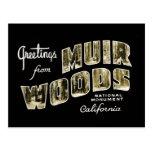 Saludos del monumento nacional de maderas de Muir Tarjeta Postal