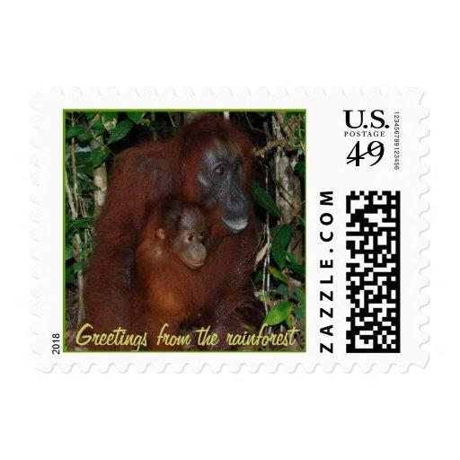 Saludos del orangután de la selva tropical sello