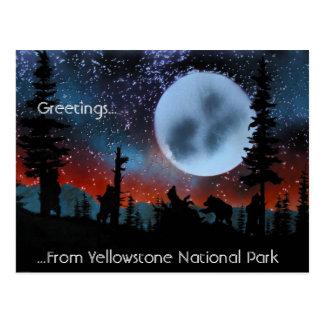 Saludos ...... del parque nacional de Yellowstone Tarjetas Postales