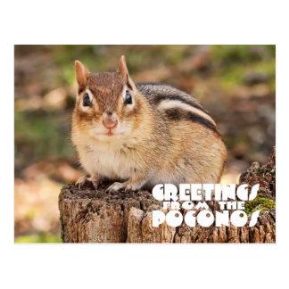 ¡Saludos del Poconos! Chipmunk gordo adorable Tarjeta Postal