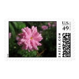 Saludos rosados sellos