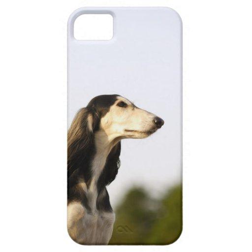 Saluki 2 iPhone 5 covers
