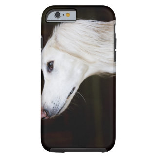 Saluki Looking Up iPhone 6 Case