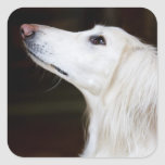 Saluki Looking Up Stickers