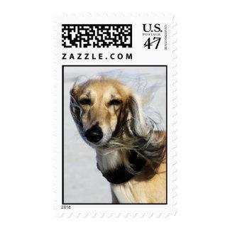 Saluki Portrait Postage Stamp