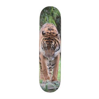 ¡SALVAJE Monopatín del tigre de Bengala