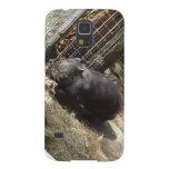 Salvaje para Wombats