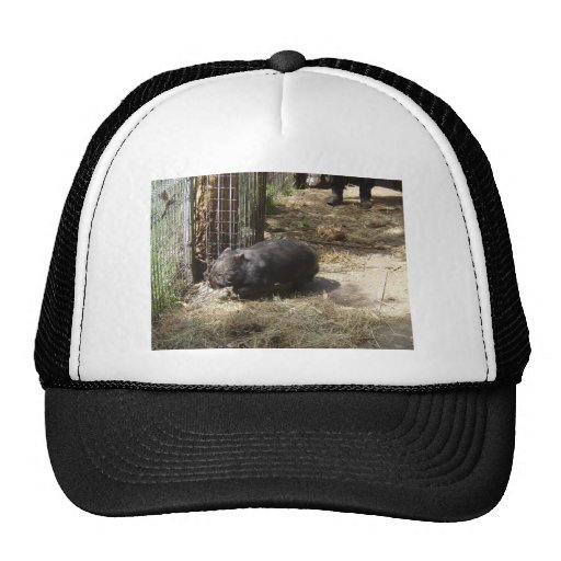 Salvaje para Wombats Gorro