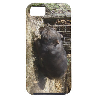 Salvaje para Wombats iPhone 5 Fundas