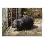 Salvaje para Wombats Tarjeta