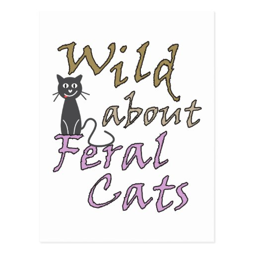 Salvaje sobre los gatos salvajes - gato salvaje di tarjetas postales