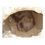 Salvaje sobre Wombats Postal
