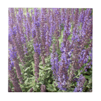 Salvia sabio Nemorosa Ostfriesland Azulejos
