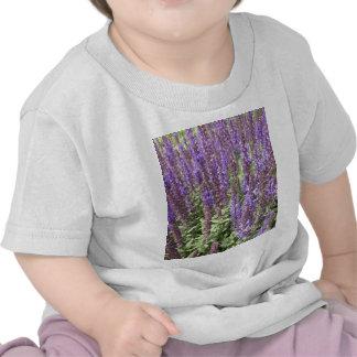 Salvia sabio Nemorosa Ostfriesland Camisetas