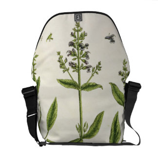 """Salviam """"de un herbario curioso"""", 1782 (color engr bolsas de mensajería"""