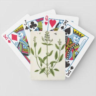 """Salviam """"de un herbario curioso"""", 1782 (color engr baraja cartas de poker"""