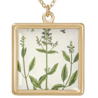 """Salviam """"de un herbario curioso"""", 1782 (color engr pendientes"""