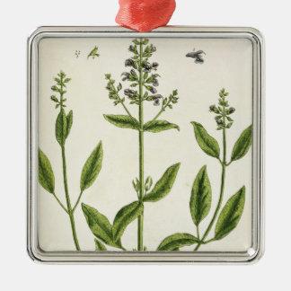 """Salviam """"de un herbario curioso"""", 1782 (color engr ornamento de reyes magos"""