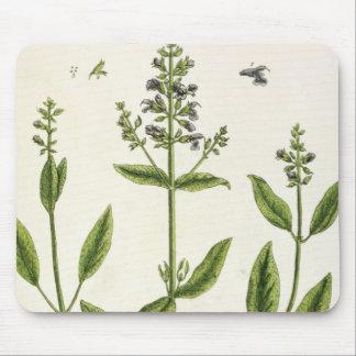 """Salviam """"de un herbario curioso"""", 1782 (color engr tapete de ratones"""