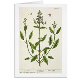 """Salviam """"de un herbario curioso"""", 1782 (color engr tarjeta de felicitación"""