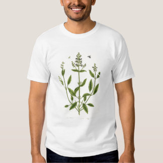 Salviam from 'A Curious Herbal', 1782 (colour engr Tee Shirt