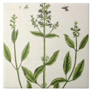 Salviam from 'A Curious Herbal', 1782 (colour engr Tile