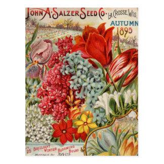 Salzer Flower Seeds Postcard