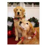 Sam and Neuman - Golden Retrievers - Gelao Post Card