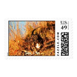 Sam, el chucho enérgico libre timbre postal