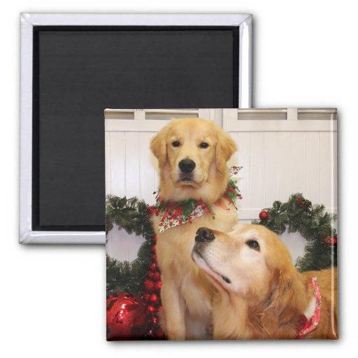 Sam y Neuman - perros perdigueros de oro - Gelao Imán