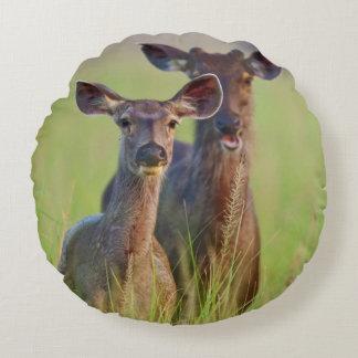 Sambar Deers in the meadows, Corbett National Park Round Pillow
