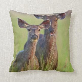 Sambar Deers in the meadows, Corbett National Park Throw Pillow