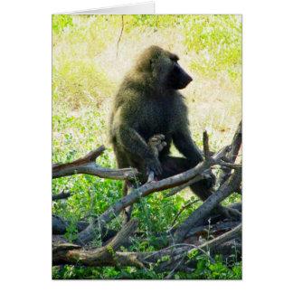Samburu Baboon Card