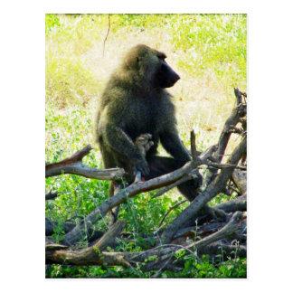 Samburu Baboon Postcard