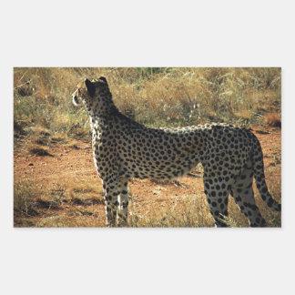 Samburu Cheetah Rectangular Sticker